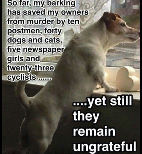 So Far My Barking Has Saved Them From Dog Logic Funny Picture Quotes Funny Animal Pictures