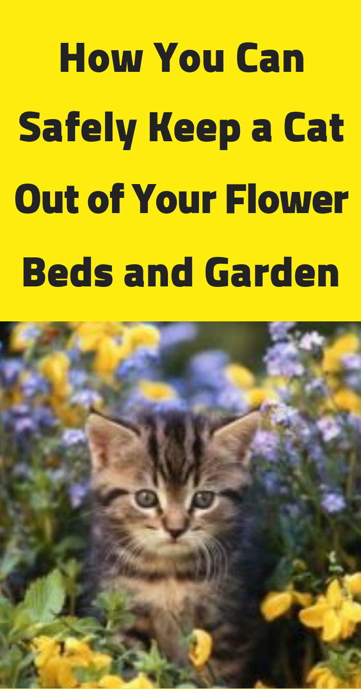 How You Can Safely Keep A Cat Out Of Your Flower Beds And Garden Flower Beds Cats Flowers