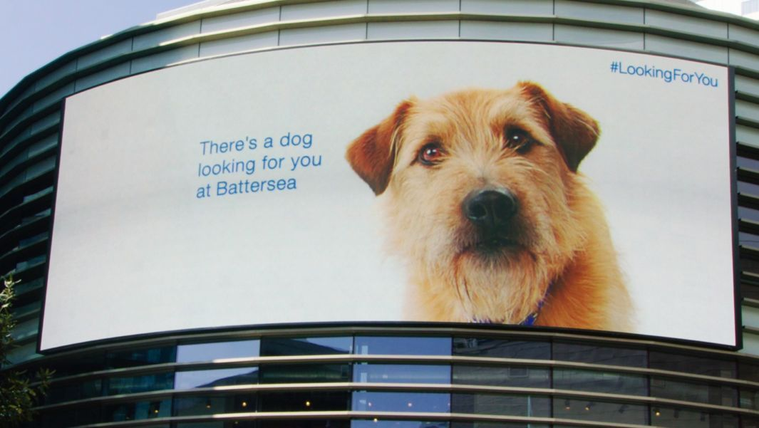 This High Tech Pet Adoption Campaign In London Will Tug At Your Heartstrings Battersea Dogs Battersea Dogs Home Dogs