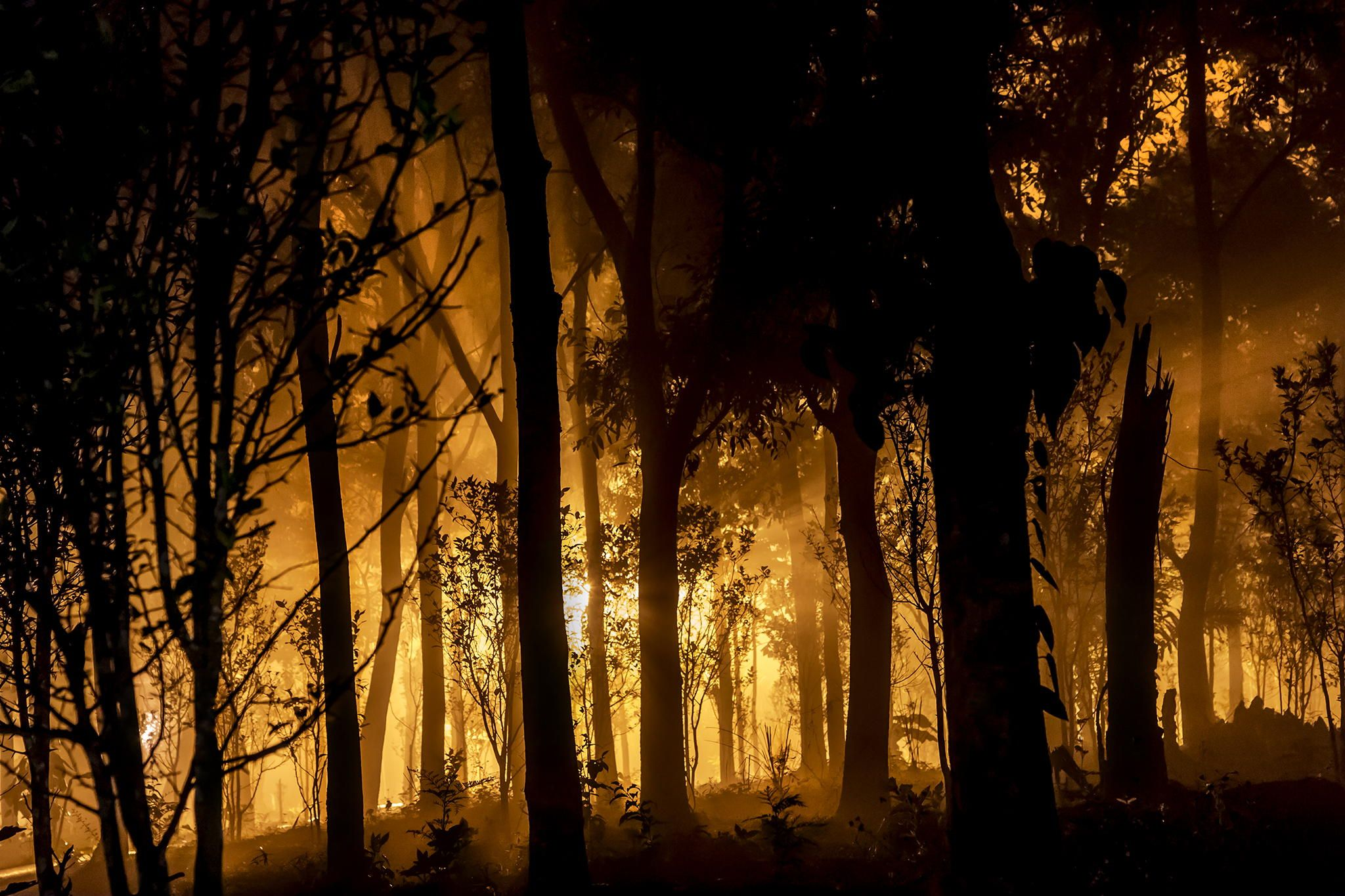 Forest Fire by Abhisek Sarda on 500px