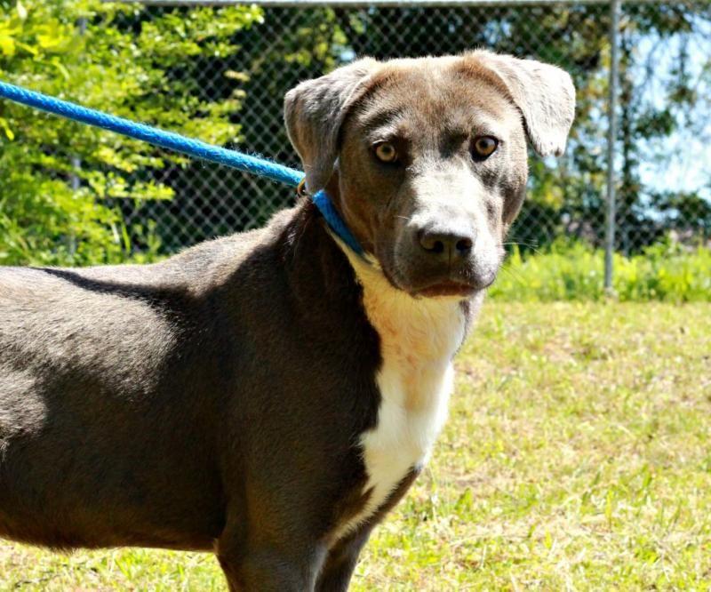 Jasper county animal control urgent meet akon a
