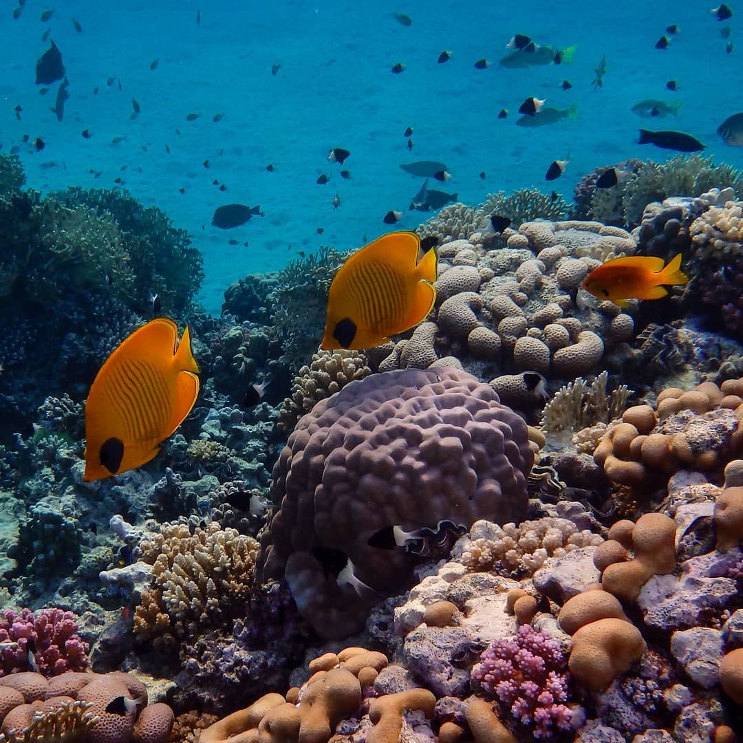 Coralreef Underthesea Tropicalocean Oceanconservation