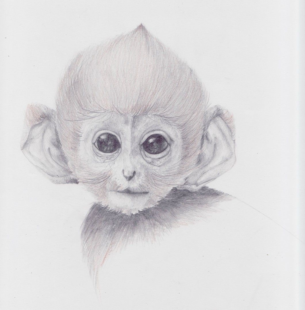 Style And Macarons Animal Drawings Monkey Drawing Pencil Drawings