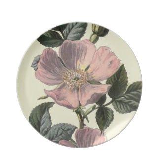 """""""Ejemplo botánico del rosa de perro"""" Plato"""