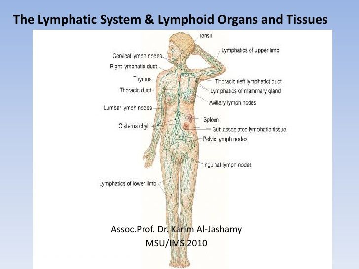The Lymphatic System Lymphoid Organs And Tissues Lymphatic