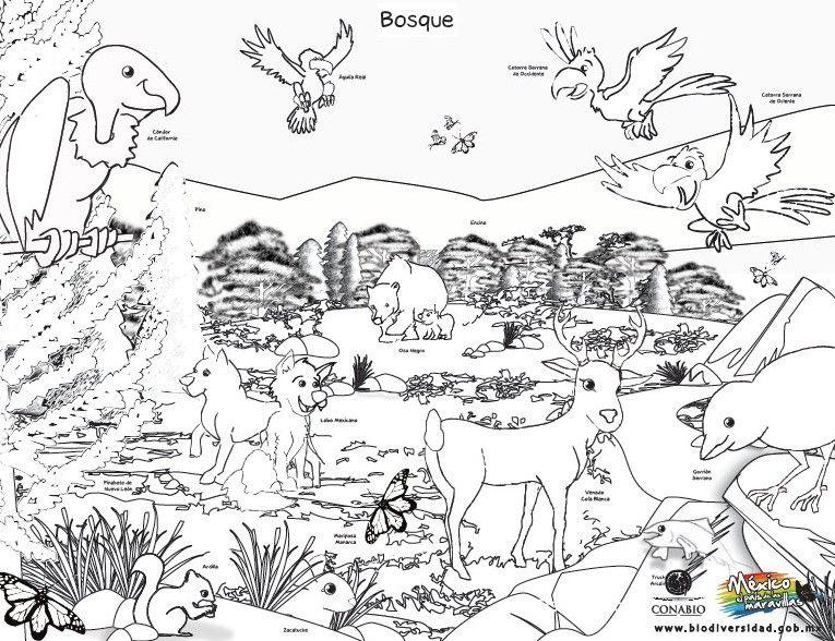 Espectaculares dibujos de los ecosistemas Actividades Educativas y - new tabla periodica en blanco y negro pdf