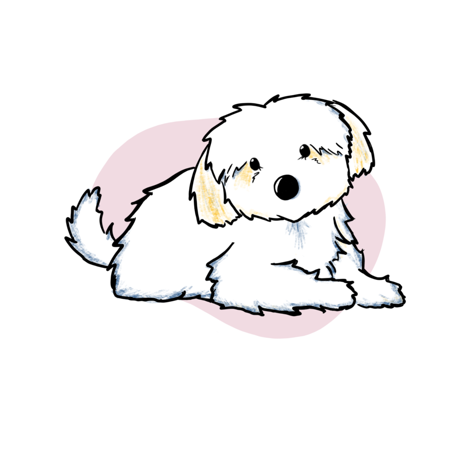 Pin By My Doodle Maltipoos On Https Www Mydoodlemaltipoos Com Maltipoo Puppy Maltipoo Puppies For Sale Puppy Adoption