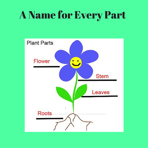 edu2u Science Parts of a Plant A name and a befitting