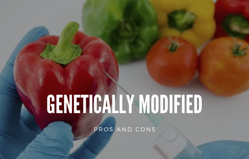 College Essay About Pro And Con Of Genetically Modified Genetic Human Well Being Food