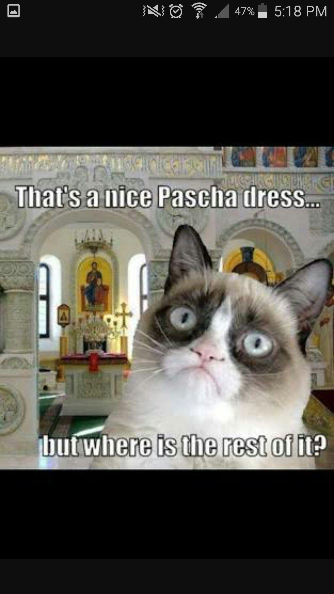 Grumpy Orthodox Cat Omg There It Is