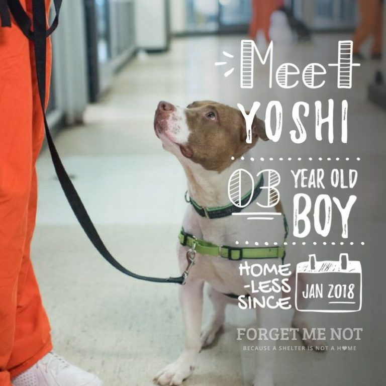 Yoshi Is Ready To Break Out Of Jail Fur Real Adoption Dog