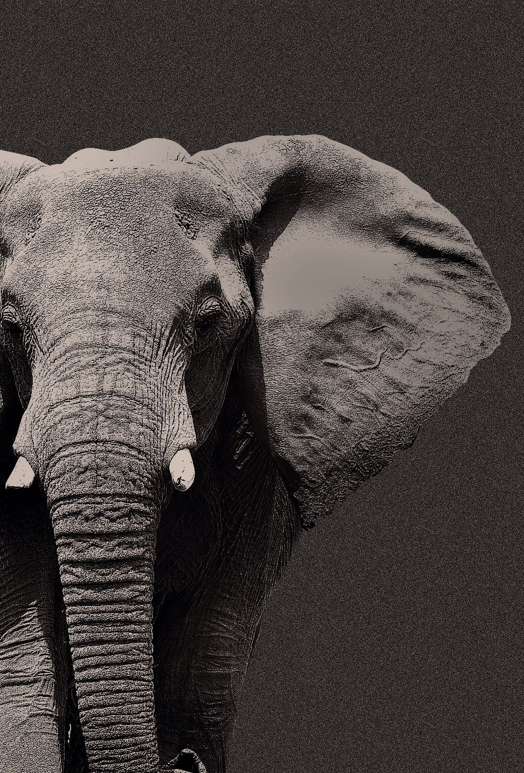 Epingle Par Emma Pivoda Sur Elephant Animaux Photo