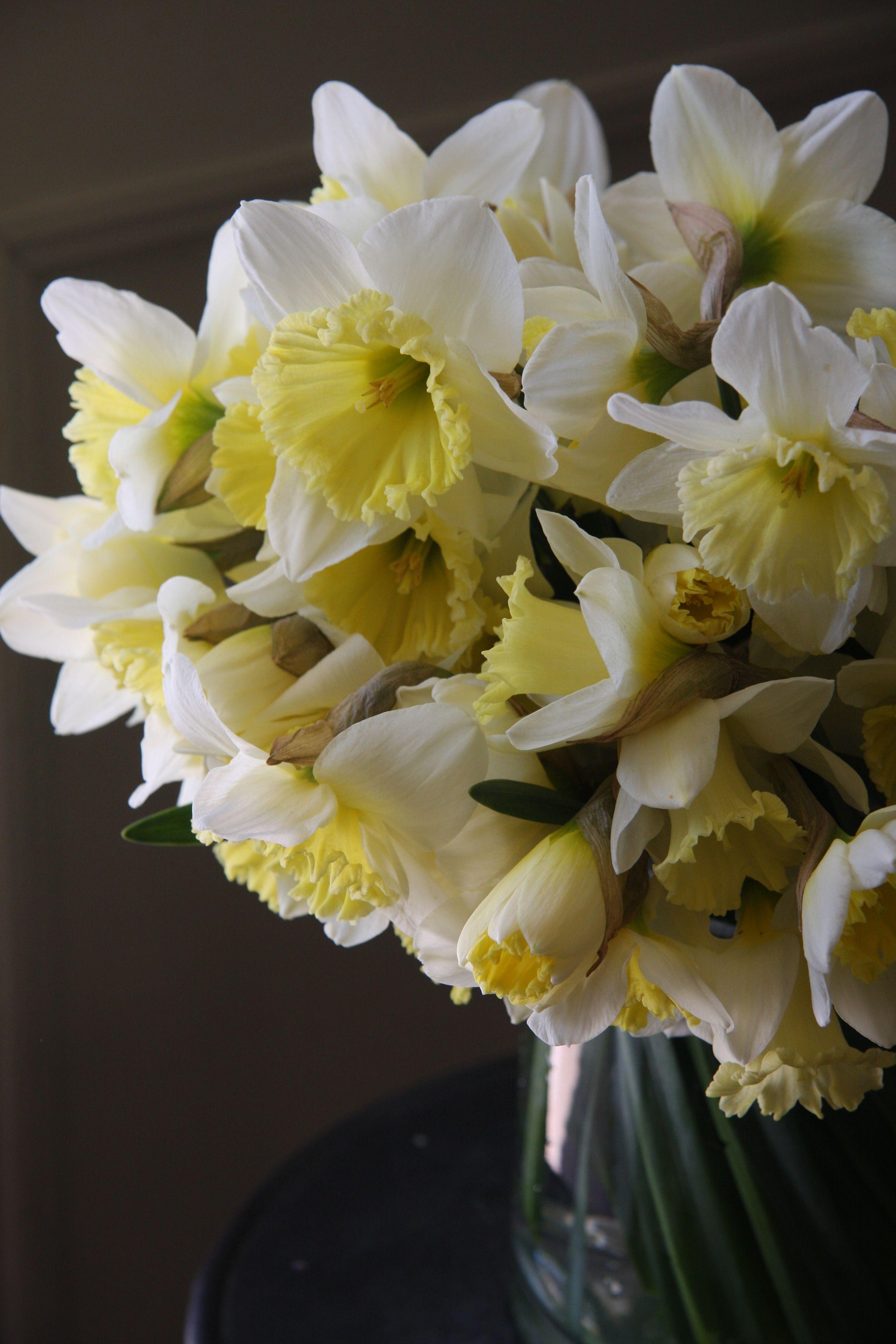 Narcisi Daffodil Daffodils Pinterest Daffodils Flowers And