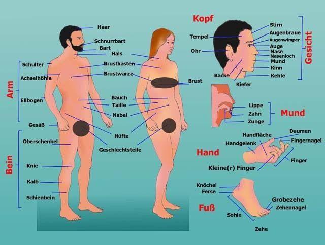 Körperteile, body | German Language | Pinterest | Learn german ...