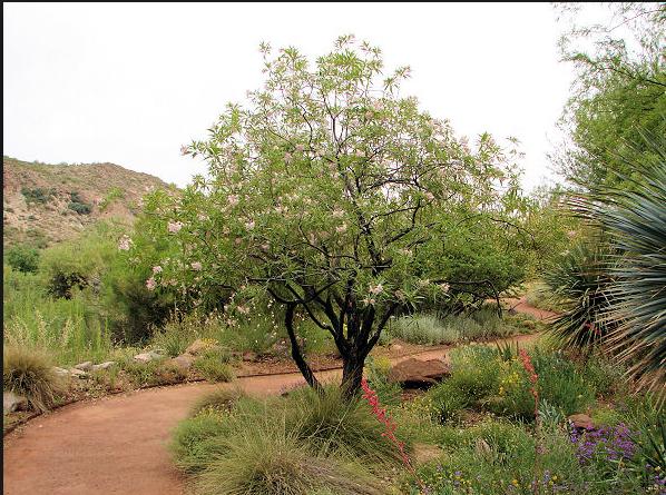 Pin by Caitlin Talmage on Mariposa garden   Pinterest   Landscaping ...
