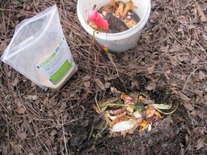 After collecting food scraps in the bokashi bin, dig them into the compost to feed soil microorganisms and build soil health. Bokashi sprinkled into the compost acts as an accelerator and speeds up decomposition. My food scraps disappear in a week in this active compost pile!