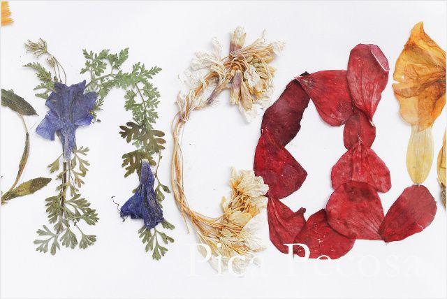 Haz un cuadro de tu nombre con flores secas Creativity - flores secas