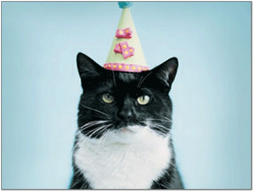 Image Result For Happy Birthday Funny Animals CATTITUDEFUNNY - 18 hilarious sad cat problems that might explain why your cats so moody