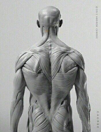 Anatomía de espalda | poses de acsion | Pinterest | Anatomy