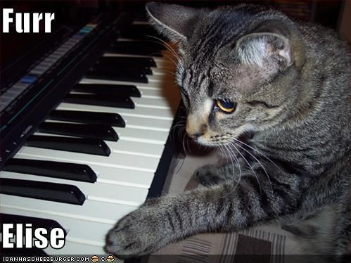 Lmaooo My Little Doodle Is Such A Dork Yep She Was On Icanhascheezburger Funny Pix Piano Funny Funny Cats