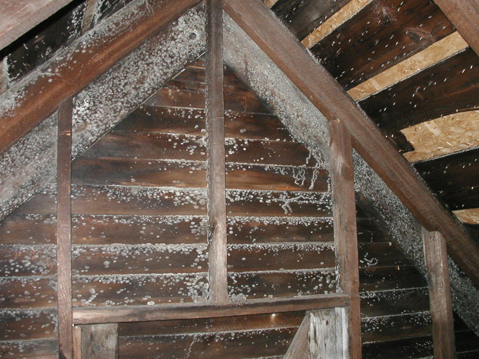 Resemblance of Molds in Attic and How to Resolve Them ...
