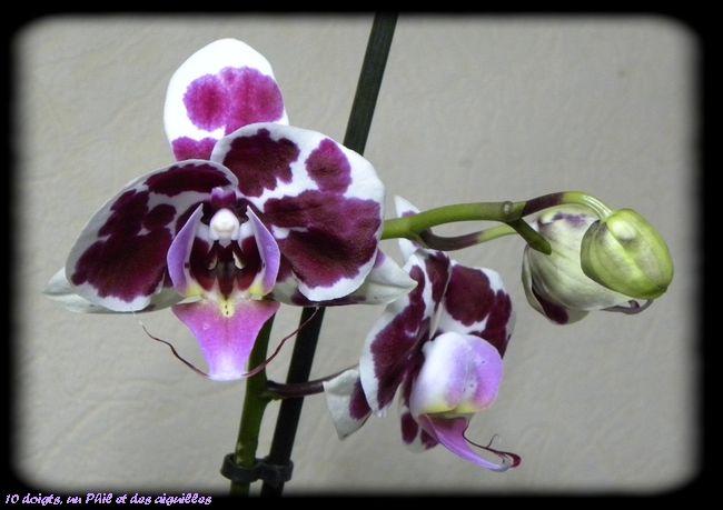 Lundi Soleil 6 Parme Une Autre De Mes Orchidees Orchidee Sauvage Orchidee Cultiver