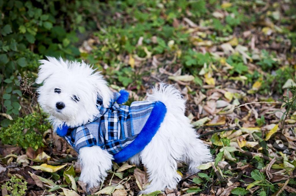 Elegancki płaszczyk dla psa ocieplany krata