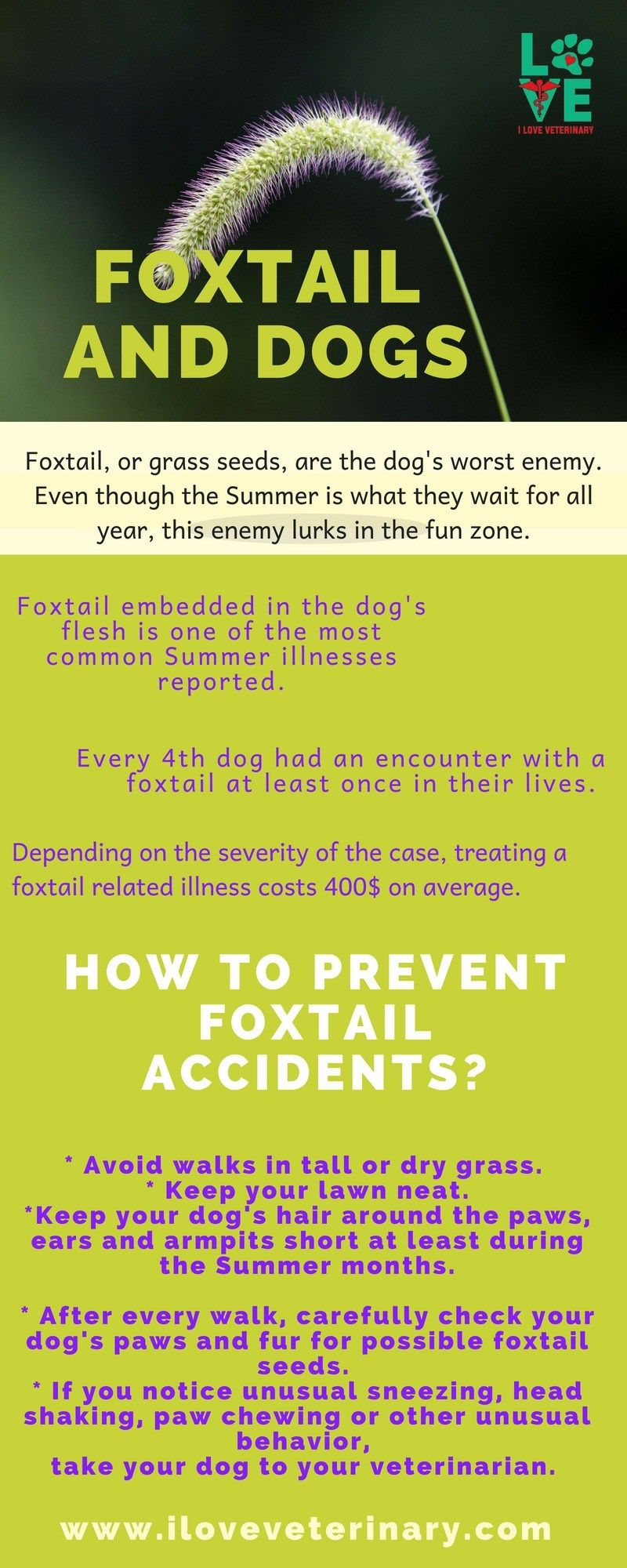 Foxtail And Dogs I Love Veterinary Pet Health Veterinary Care