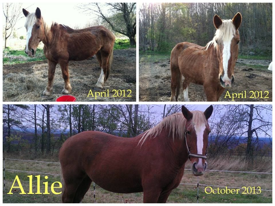 Horse Rescue Saratoga NY Horse Sanctuary Pattersonville
