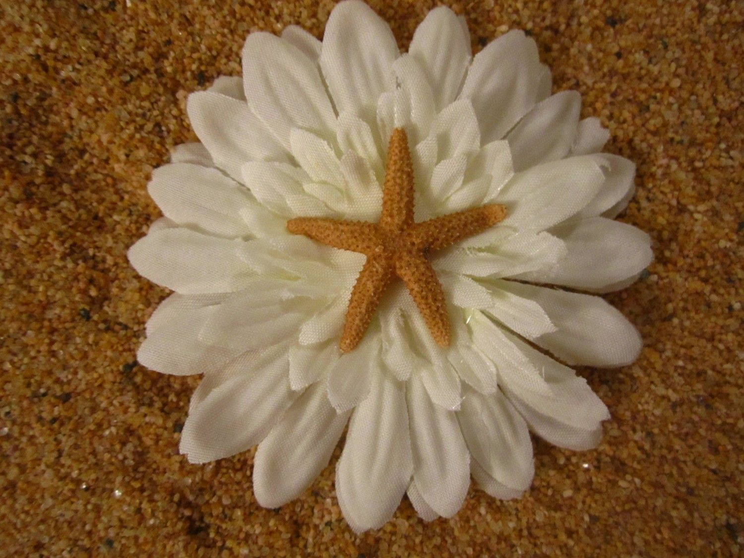 Image Detail For Small White Gerber Daisy Flower With Brown Starfish Center Hair Clip Daisy Flower Gerber Daisies Flowers I live alone with alan who is a the aiki dojo message — aikido center of los angeles. pinterest