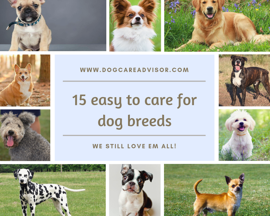 15 Easiest Dogs To Take Care Of Dogs Dog Breeds Funny Cat Images