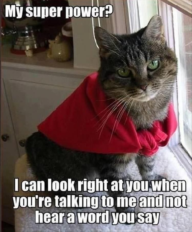 20 Pics Funny Cat Memes To Cheer You Up On A Bad Day Lovely Animals World Terriermix Funny Animal Pictures Funny Cat Memes Funny Animals