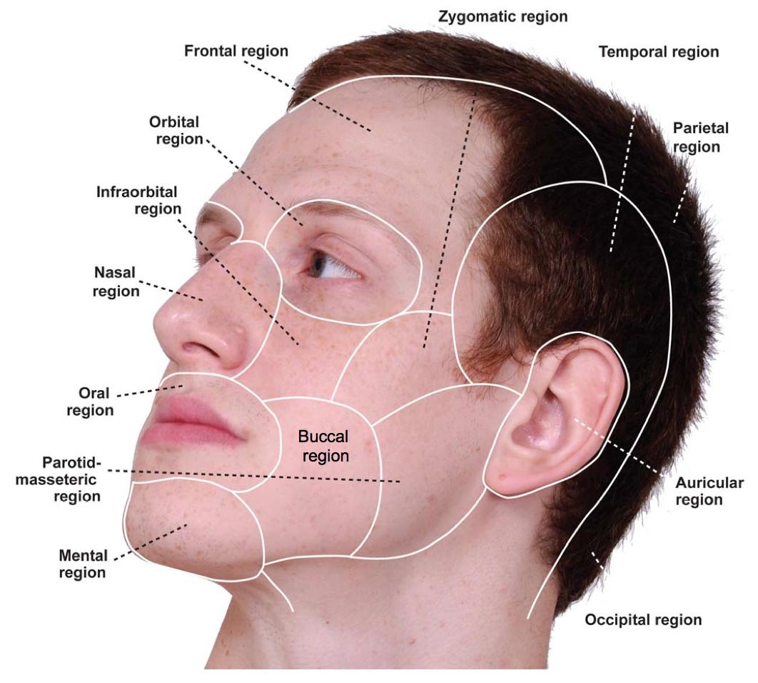 zygomatic parotid and buccal region | Maxilofacial surgery ...