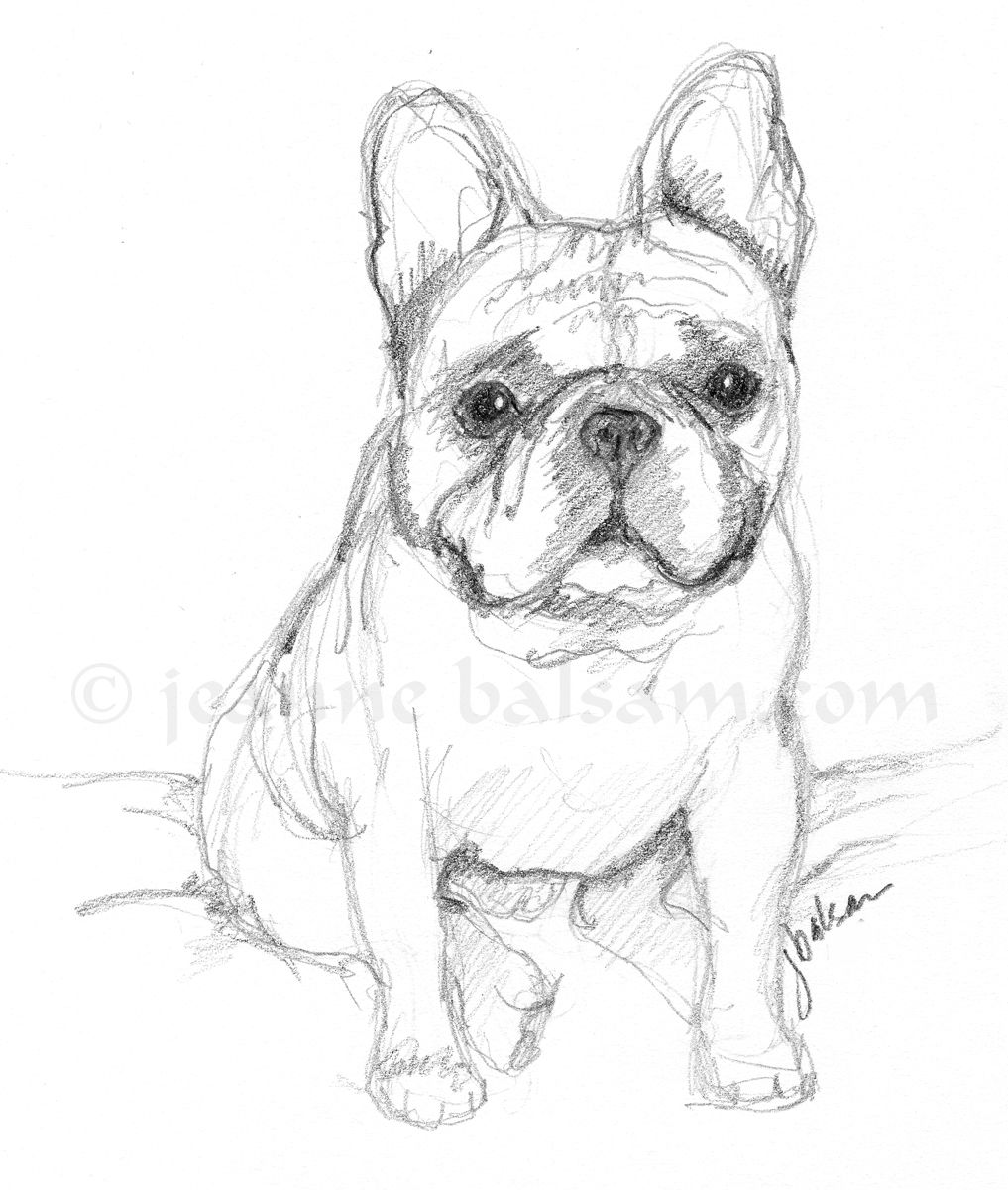French Bulldog Sketch In Pencil Adorable Frenchie A Little