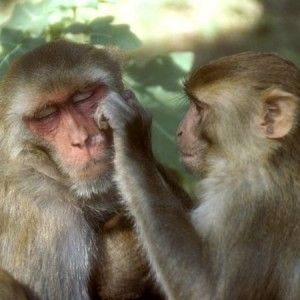Monkey Images