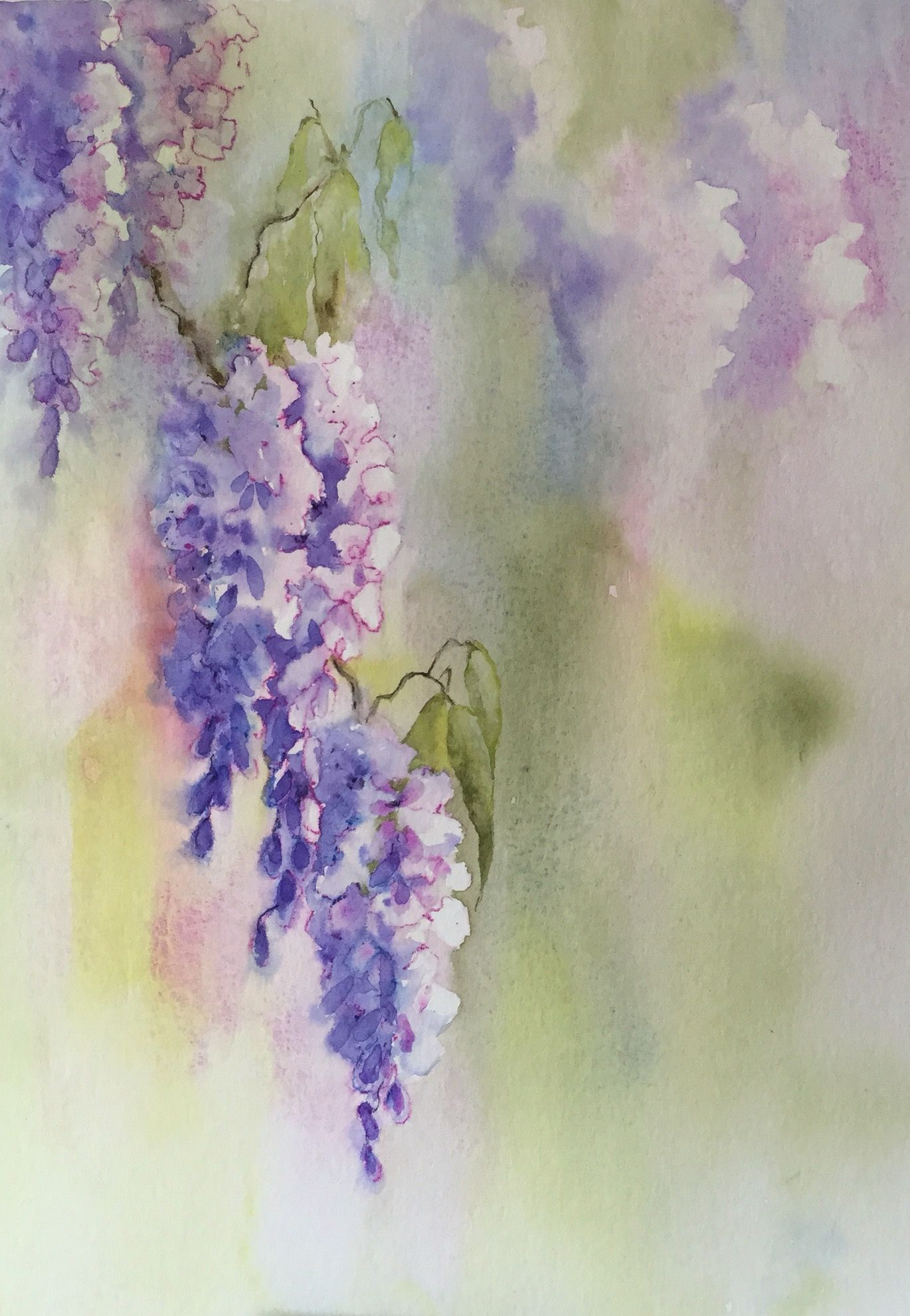 Wisteria watercolour by Judith Jerams