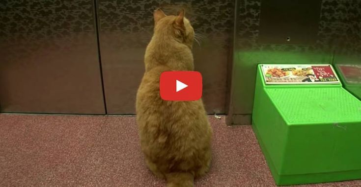 Cat Dreams Of Seeing His Former Owner Every Time The Elevator