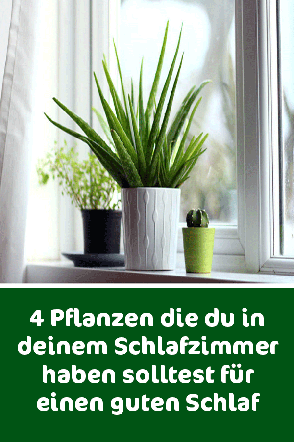 4 Pflanzen Die Du In Deinem Schlafzimmer Haben Solltest Fur Einen Guten Schlaf Schlafzimmer Schlafen Pflanzen