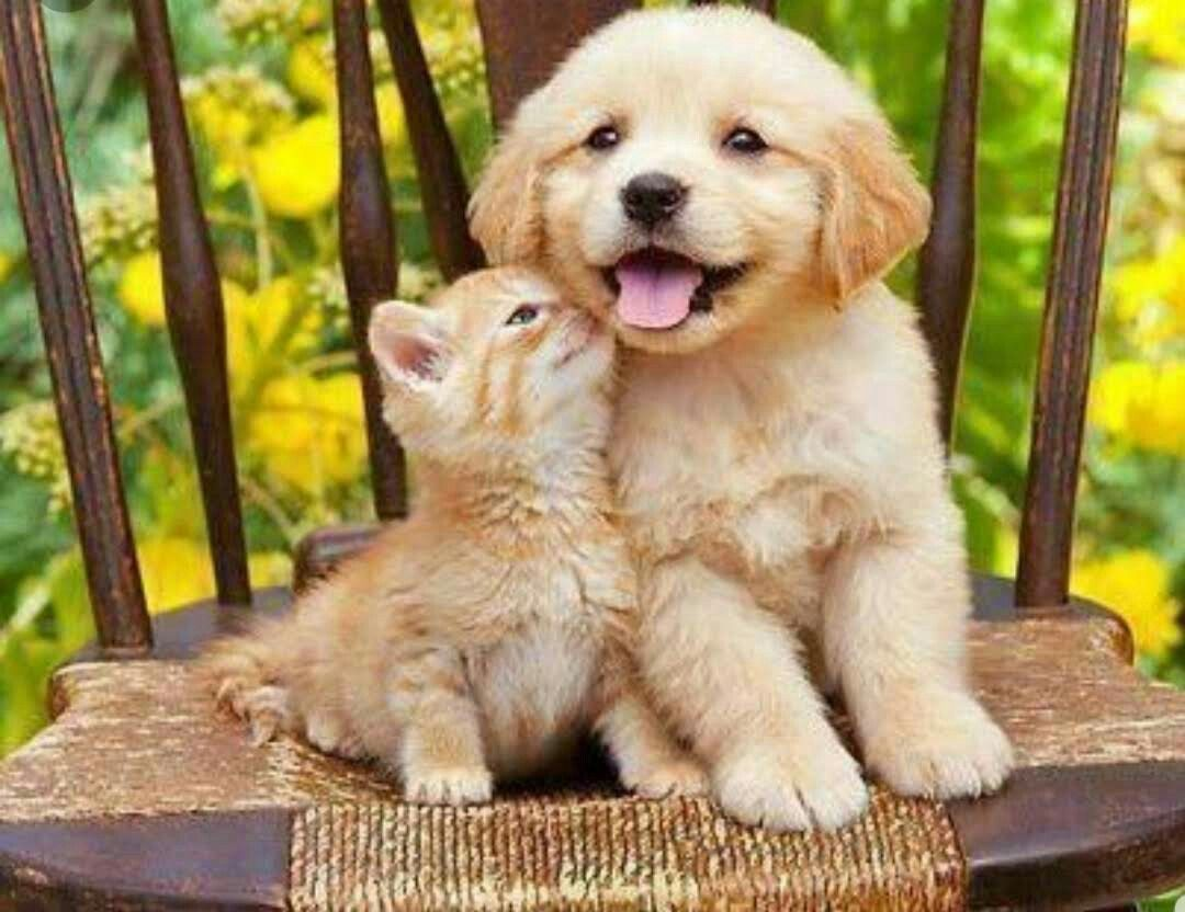 Pin By Rebecca West Welch On Animais Fofos Cute Animals Kittens Cutest Kittens And Puppies