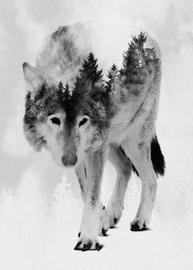 Wolf and Forest 8