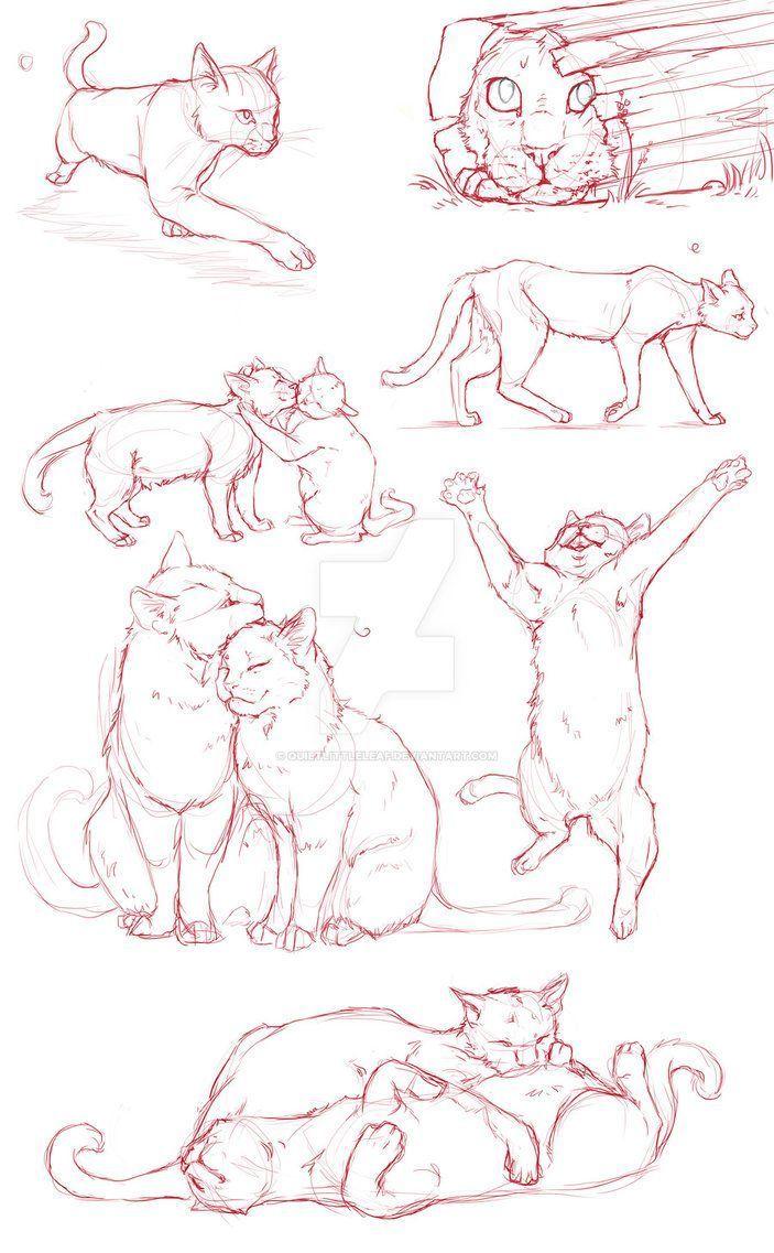 Photo of Cat Dump por QuietLittleLeaf – Blog de animales