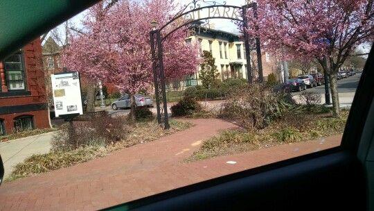 Ledroit Park Washington Dc Ledroitpark Dc Dmv Realestate Plants Tree Keep It Real