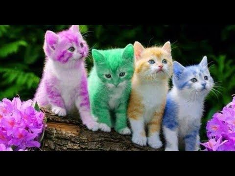Top 10 Most Beautiful Cats In The World 2018 Rainbow Kittens Cute Cats Beautiful Cats