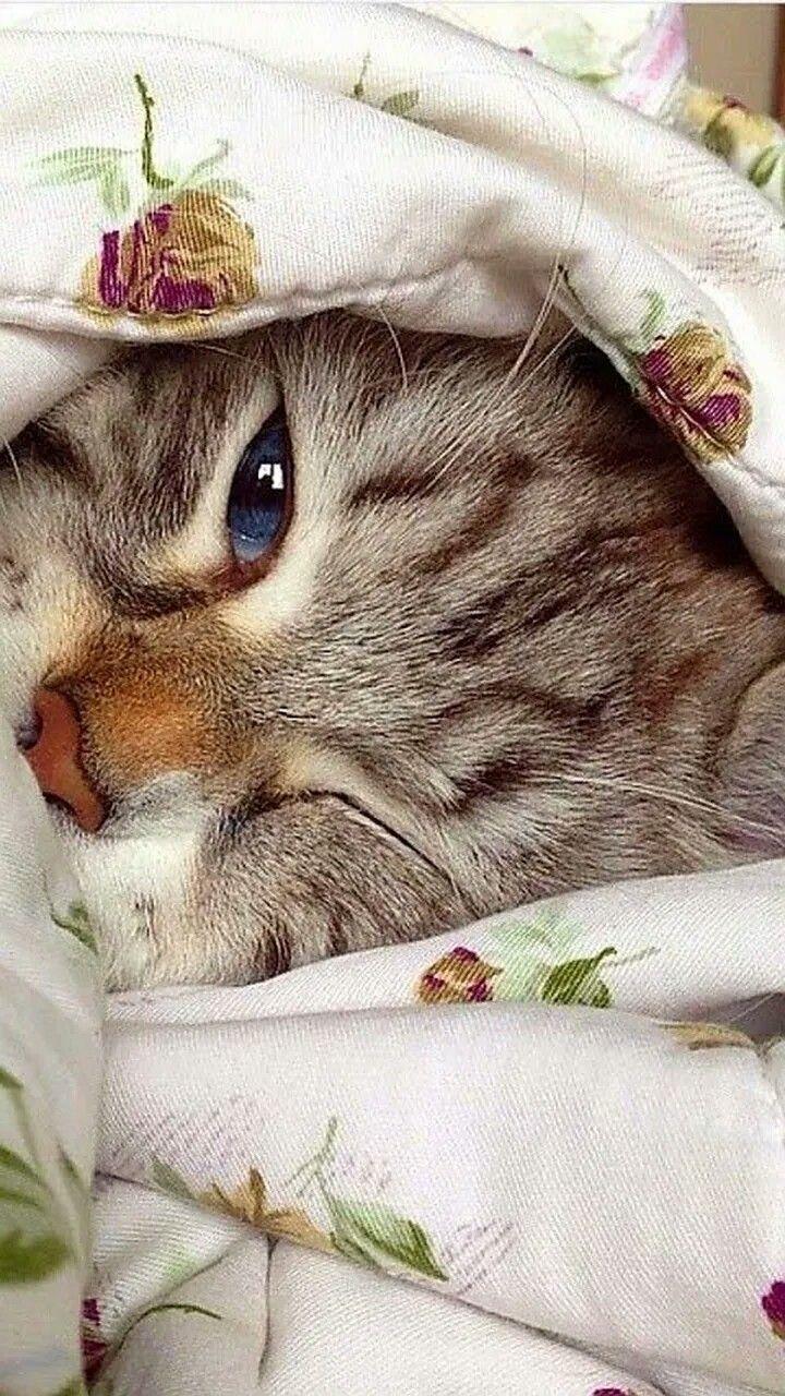 Смешные картинки с добрым утром с котятами, смешные картинки