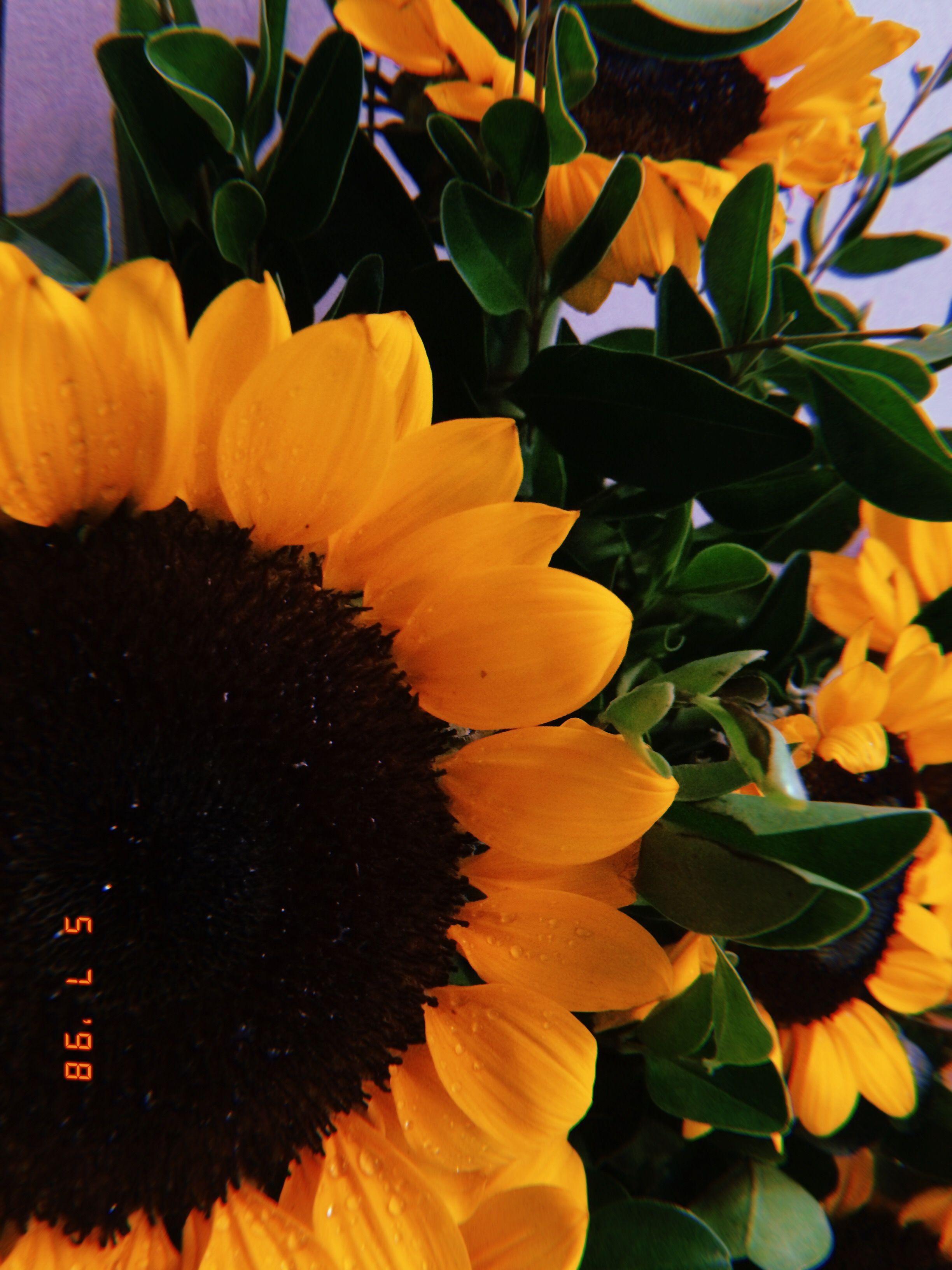 pinterest кαℓєyнσggℓє Sunflower wallpaper, Beautiful