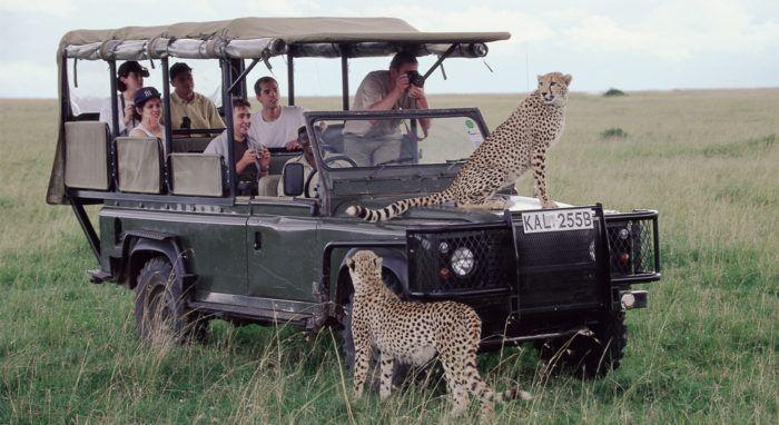 Safari: Hvis det er den store vandringen som står øverst på ønskelisten din, bør du besøke Kenya fra juli til oktober. Men vil du spare 3000–6000 kroner på safarireisen og oppleve savannens dyreliv uten å bli forstyrret av for mange andre kjøretøyer, bør du reise allerede i juni.