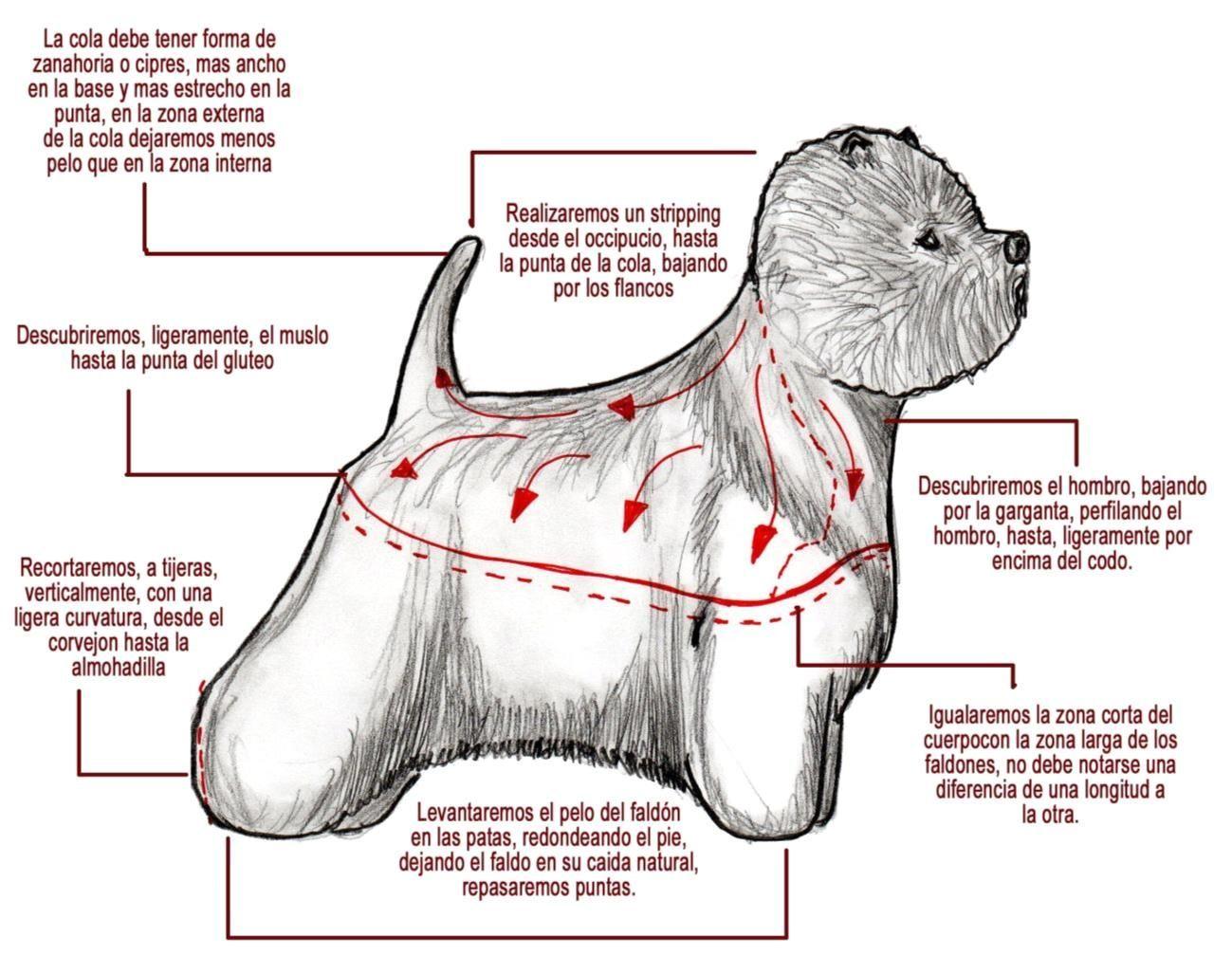 Arreglo comercial de west highland terrier. Dibujo de Miguel Lluch ...