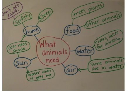 A simple concept map of what animals need to survive | Concept