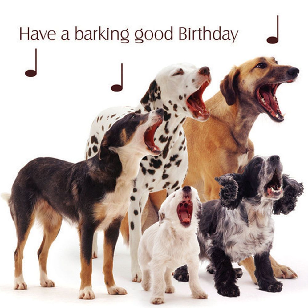 Dog Song Birthday Greeting Card Dalamtian Puppy Mutt Dog Lovers