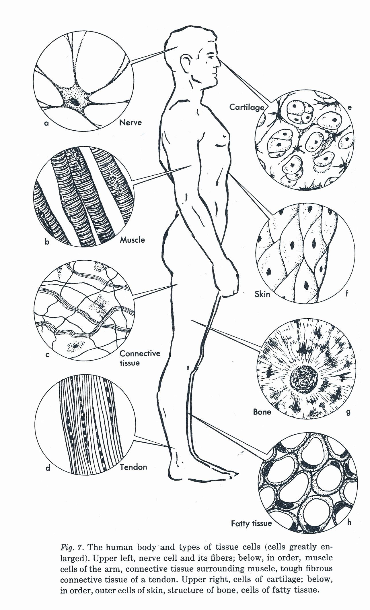 24 Human Anatomy Coloring Book In